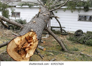 Tree from storm damages laying on a house