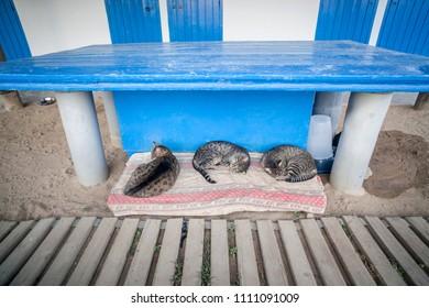Tree street cats sleeping under blue table.