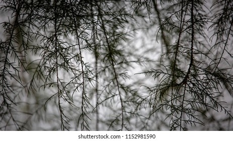 Tree structure in a smooth background