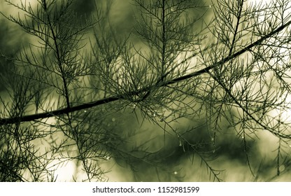 Tree structure in a soft background in green