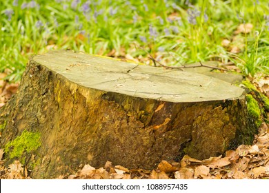Tree stump in the countryside