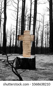 Tree stump cut with chainsaw into the shape of a cross amidst forest fire affected area.