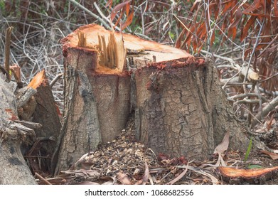 tree stump in the forest.texture background of stump