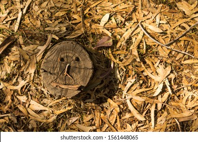 Tree stump with a funny face standing on a forest floor covered with dry fallen eucalyptus leaves, gumnuts and small sticks