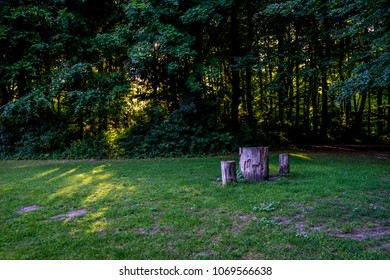 Tree stump in Haagse Bos, forest in The Hague, Netherlands, Europe