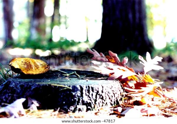 tree stump with mushroom