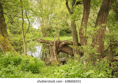 Tree stump on the bank of a river