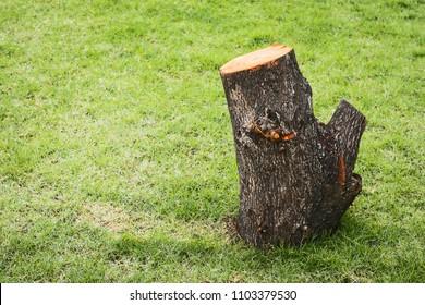 tree stump on the green grass.