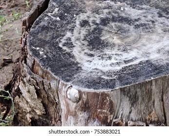 Tree stump structure