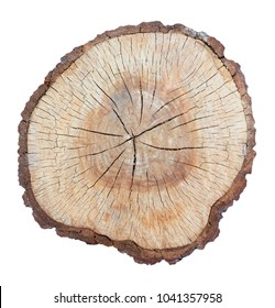 tree stump texture backgroung isolate with clipping path