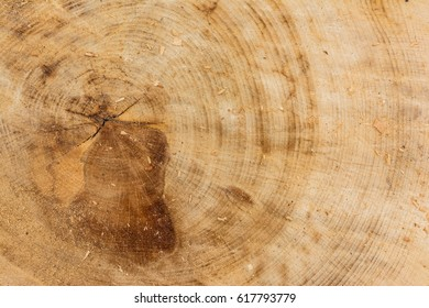 Tree Stump Texture Cut Sawdust Construction Rings