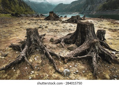 Tree stumps after deforestation located around Alpine lake in Austria