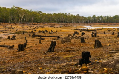 Tree stumps in a dry river bed