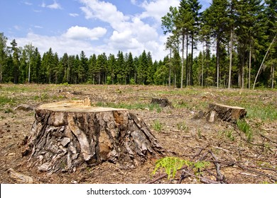 tree stumps and felled forest