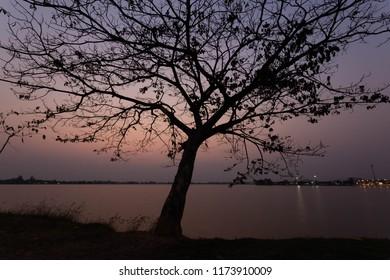 tree subset water