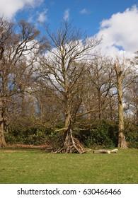 tree in the sun in richmond park, london