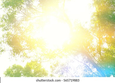 the tree and sunlight backgrounds