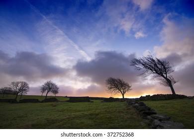 Tree at sunrise. Taken at Cragg Vale, Calderdale, UK.
