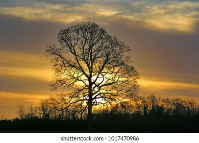 Tree at sunrise in winter