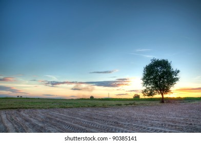 tree in sunset background