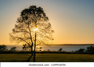 A tree at sunset, at Elk Neck State Park, Maryland