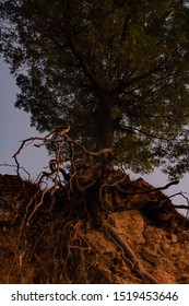 tree at sunset, exposed tree roots, exposed roots with sunset rays hitting them, green tree at sunset, long roots out of the ground, brown tree roots escape soil