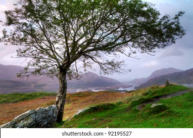 Tree at sunset in irish mountains, Killarney pass, Co. Kerry
