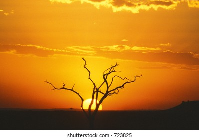 Tree at sunset - Maasai Mara, Kenya