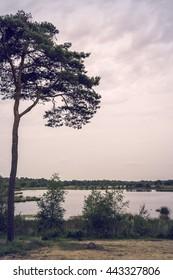 Tree and sunset on lake swamp, Kampina, Netherlands