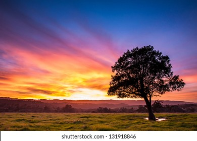 Tree Sunset Silhouette