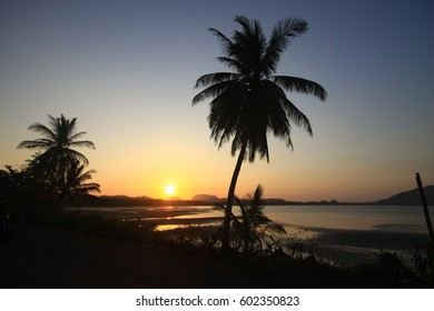Tree at sunset.Sunset at tropical location.Silhouette.selective focus.