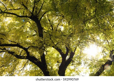 tree in sunshine