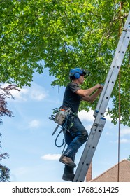 A Tree Surgeon or Arborist clinbing up a ladder ready to work up a tree.