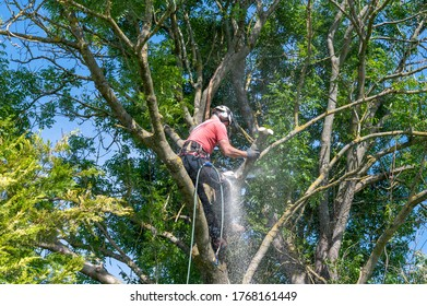 A Tree Surgeon or Arborist using a chainsaw to cut off tree branches.