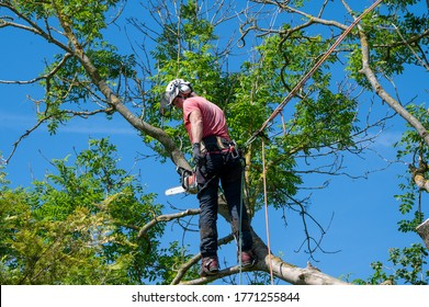 A Tree Surgeon or Arborist using safety ropes ready to work up a tree.