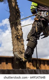 TREE SURGEON, GOLD COAST,AUSTRALIA-10TH NOVEMBER 2015:-A tree sugeon removing trees in a suburban backyard, wearing all the appropriate PPE.