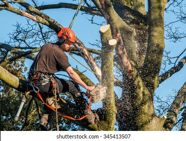 Tree surgeon hanging from ropes in the crown of a tree using a chainsaw to cut branches down.  The adult male is wearing full safety equipment.  Motion blur of chippings and sawdust.