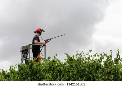 tree surgeon on cherry picker trims the top of a bush with a power tool