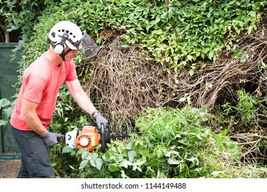 A tree surgeon worker using a power hedge trimmer to cut back a large overgrown bush.The male Arborist is wearing safety equipment and clothes.