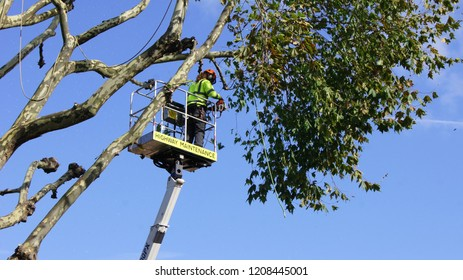 Tree surgery maintenance worker in the telescopic lift on the blue sky background.