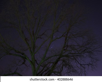 A tree surrounded by the night sky and Orion's belt.