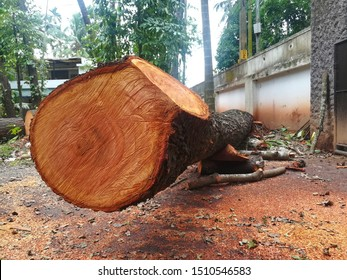 Tree surrounded by saw dust, Tree felling, I cannot supply oxygen anymore, Mother of nature is dead, Tree hit by cyclone.