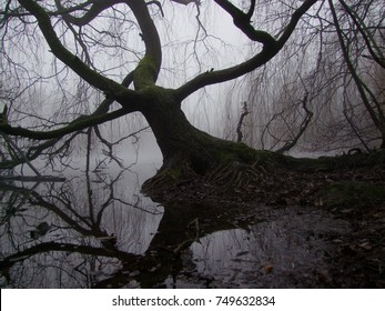 Tree in swamp