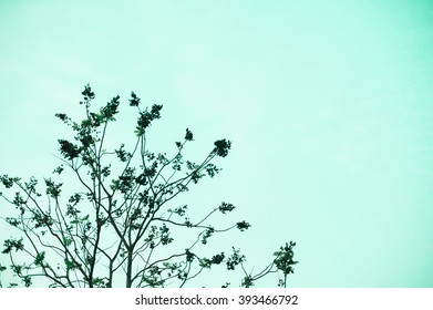 tree sweet pastel color soft and blur style for background.
