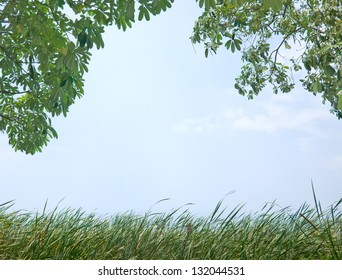 Tree and tall grass with clear blue sky as in the concept of nature background