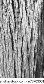 Tree texture.