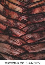 Tree Texture pettern