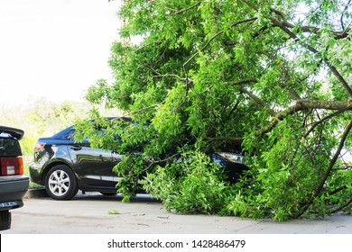 The tree that fell on the car during a hurricane. Broken tree by car. City after the tornado