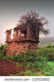 the tree that grows inside the ruin, life within death,photograph of a Galician hórreo, in ruinous state, with the sun setting, as an allegory of the end, of death,