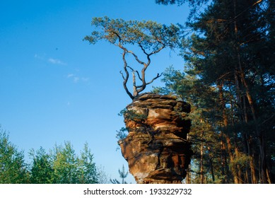 A tree that grows out of a rock of unusual shape, like somewhere in the desert or Arizona.  A stone pillar or cliff and a twisted tree on it.  Mountain in Germany